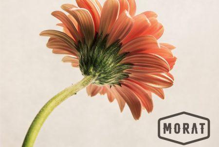 """A banda Morat lança a faixa """"Cuando Nadie Ve"""", disponível em todas as plataformas digitais"""