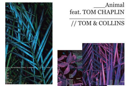 """Tom & Collins apresentam seu novo single, ouça """"Animal"""", com a colaboração de Tom Chaplin"""